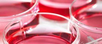 روش های تازه جهت جلوگیری از رشد سلول سرطانی کشف شد